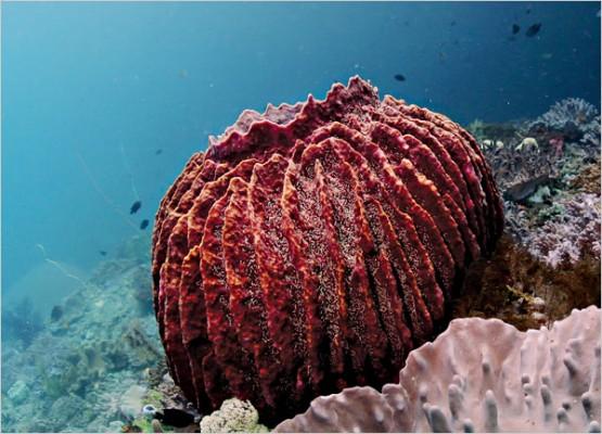 26367305 555x400 Underwater Discoveries