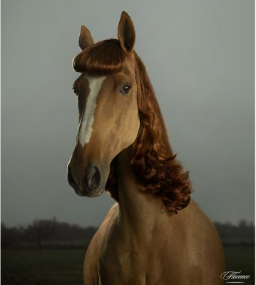 horse3 359x400 Wolensteins Horses in Wigs