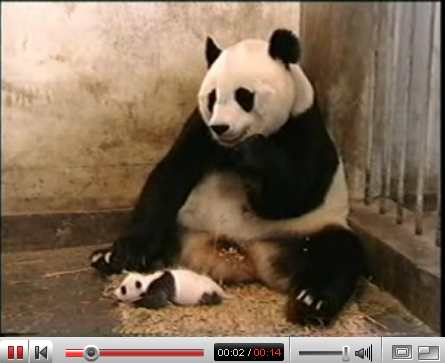 panda sneeze youtube video iamge Made For YouTube Movie
