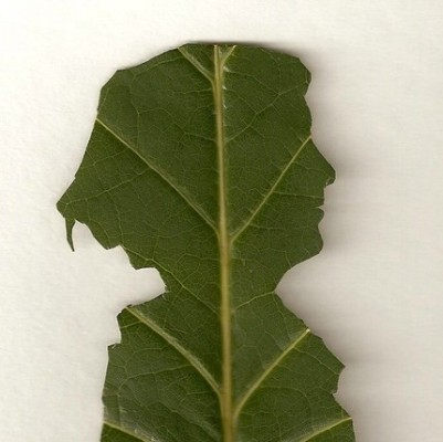 il 430xN 33221480 401x400 Is That My Face or a Leaf?