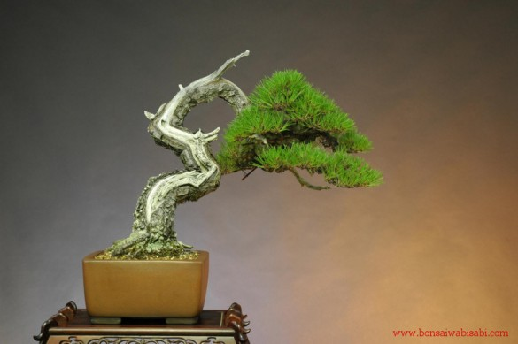 01 585x389 The beautifully twisted art of Bonsai.