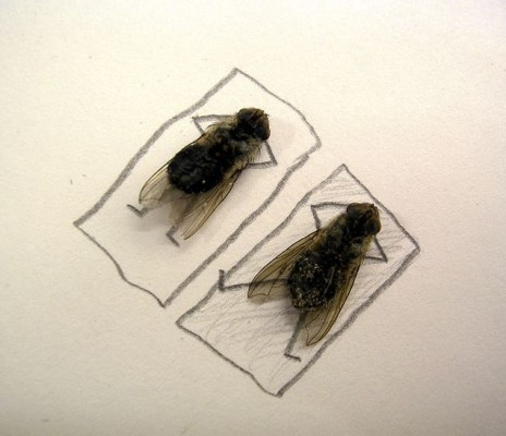 dead flies art 03 464x400 Humorous Fly Art by Magnus Muhr