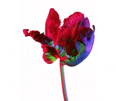 torkil flowers 38 40 4 457x400 Torkil Gudnason